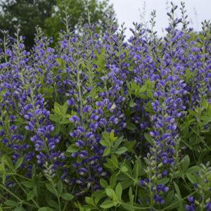 Decadence Blueberry Sundae