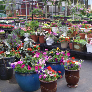 Garden Fertilizer Center Store