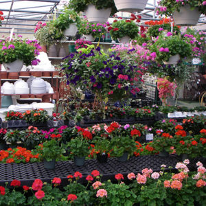 Organic Garden Center Store