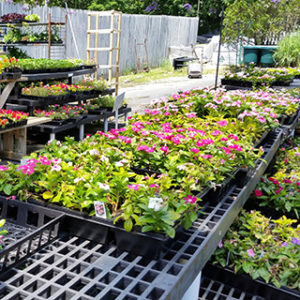 Flowers and Plants Store