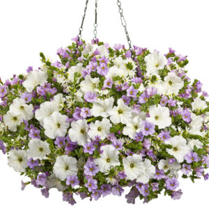 Combo Hanging Basket