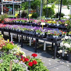 Hanging Baskets Planters Plants