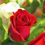 H-Valentines Day