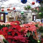 Seasonal - Holiday Flower