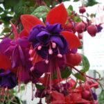 Seasonal / Holiday Flowers
